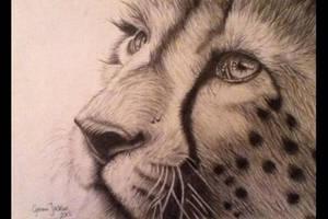 Cheetah by Gemma-Jackson
