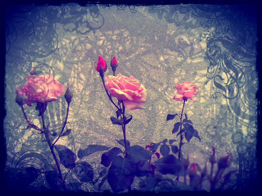 Rose Valley by Christiania-unica