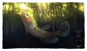Faramir (the fish)