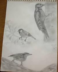 Birds by butterfly87