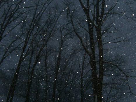 Snowing  Jan 10th, 2009