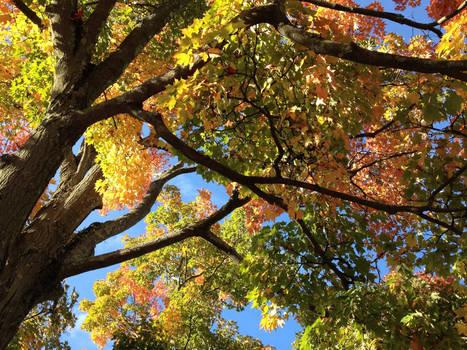 Colorful Autumn Leaves 1