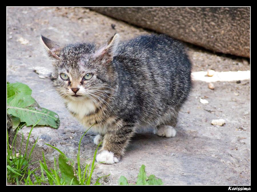 Street cat by Katlinegrey