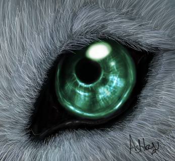 http://fc07.deviantart.com/fs22/f/2008/011/7/e/wolf_Eye_by_Ash_Dragon_wolf.png