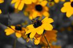 Bee #3 by MrBlack-Magic