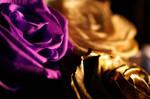 Rose #6 by MrBlack-Magic