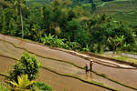 Balinese rice terraces by MrBlack-Magic