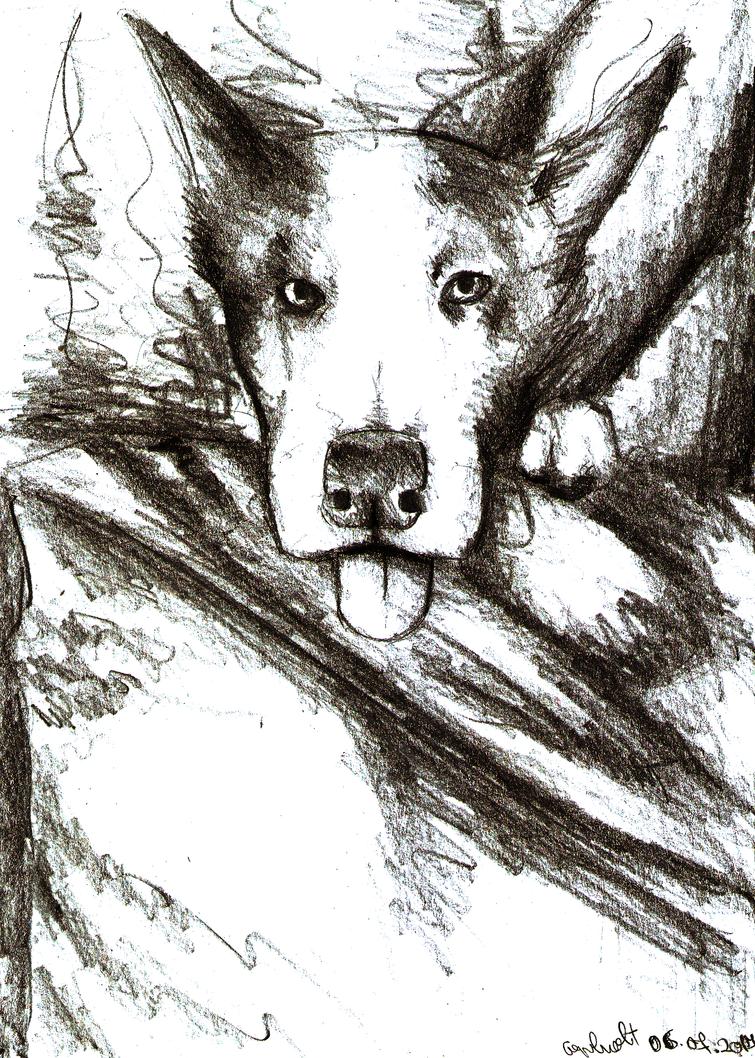 [Rysunki] by Orzech  - Page 3 Dogger_by_theorzeszek-dbgon6n