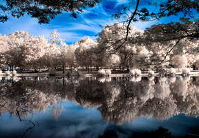 Perfect Reflection by momoclax