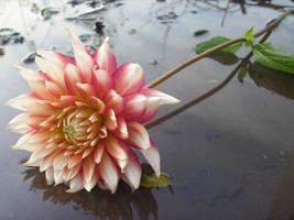 Autumn Flower In The Water by vbrigitta