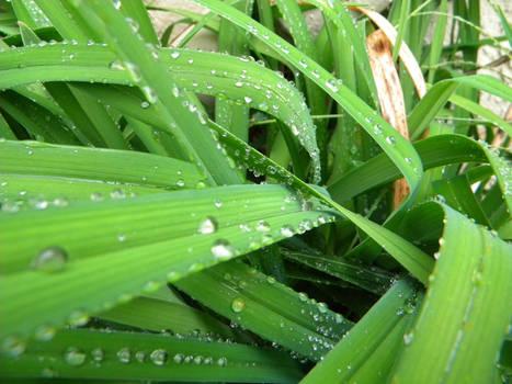 Rainy Day Picture 4