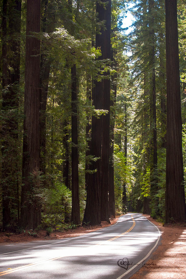 Avenue of the Giants by cheslah