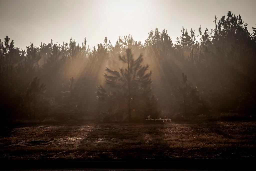 Hazy Morning by cheslah