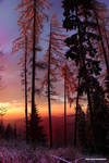 Perfect Sunrise II