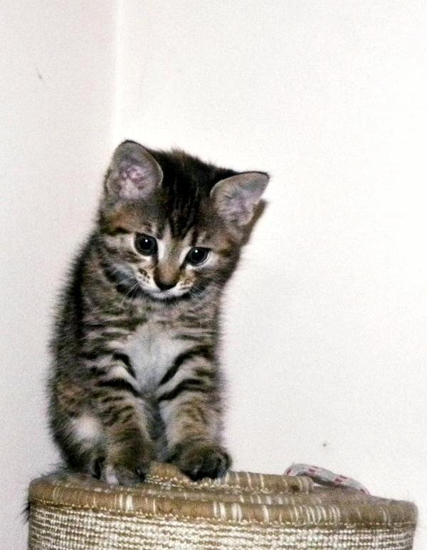 Kitty 2. by Freaks2