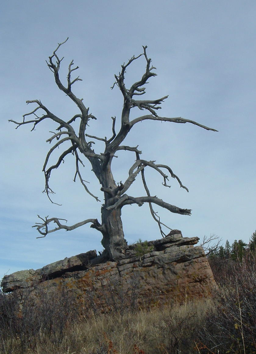 The Wretched Tree