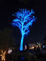 Tree Bright