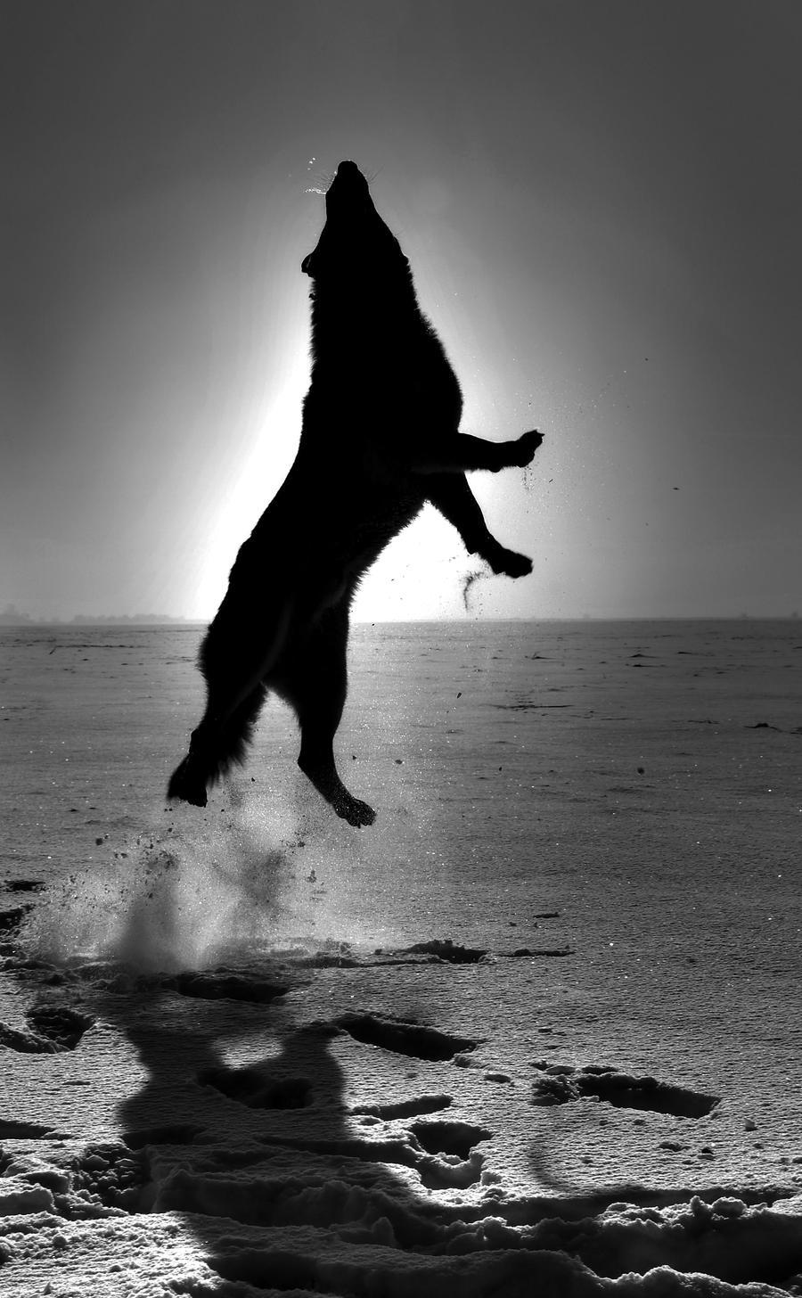 Wild Dancer by anubis-myr