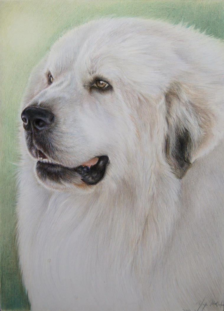 pyrenees dog 4 by Booze528