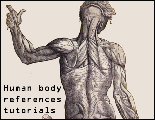 Library reference-Humans