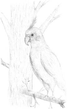 Delilah sketch