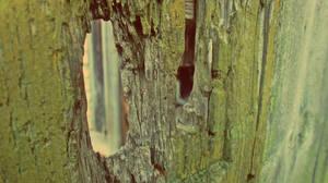 The Old Wooden Door by Zorodora