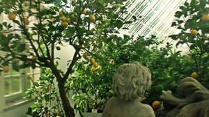 Lemon Trees by Zorodora