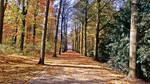 Way Of Leaves