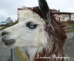Ice Eyes by Zorodora