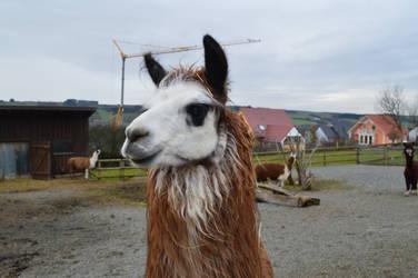 Lama Dream by king-corax