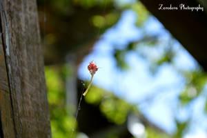 Captured by Zorodora