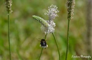 Bumblebee Flight by Zorodora