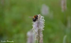Pollen Collecting by Zorodora