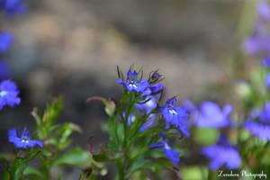 Tiny Blue by Zorodora