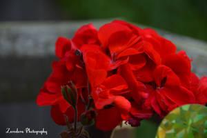 Shining Red by Zorodora