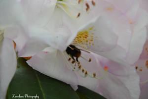 Headlong In The Blossom by Zorodora