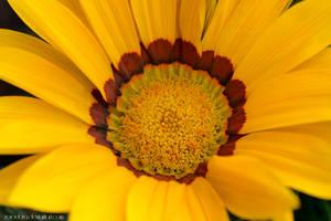 Petals Of The Sun by Zorodora