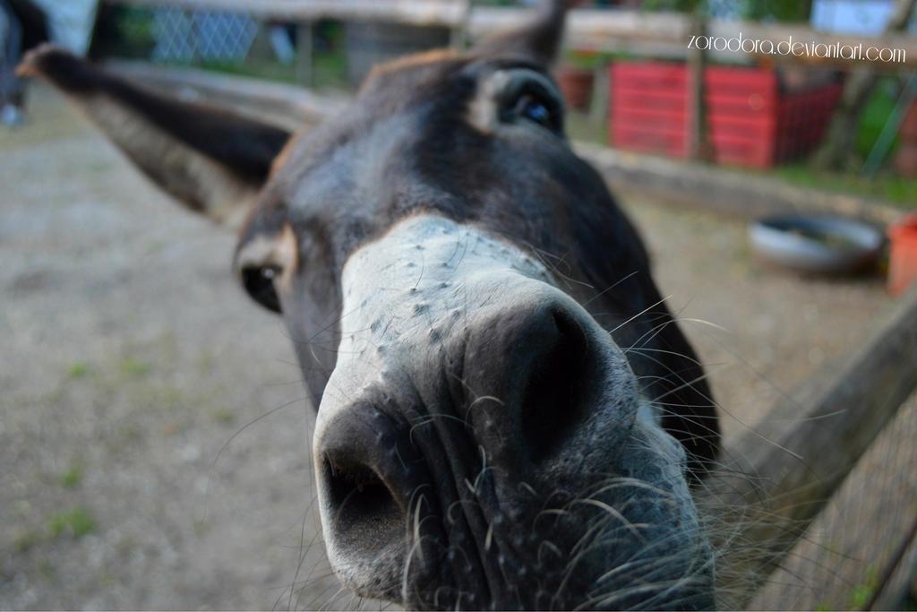 Hello There! by Zorodora