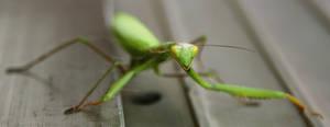 Mantis by ScorpionEntity