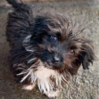 Pocket puppy by ScorpionEntity