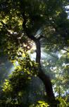 Ways of light 3