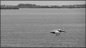 Flight - B/W by MajorTommy