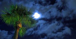 Tree n' Moon by MajorTommy