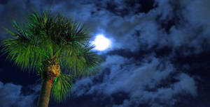 Tree n' Moon
