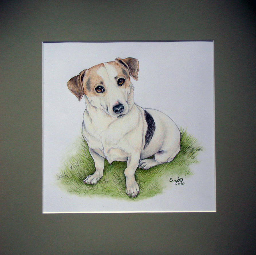 Jack Russel Commision by elle-so