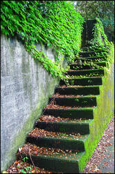 2006-06-17, Moss-covered stairs