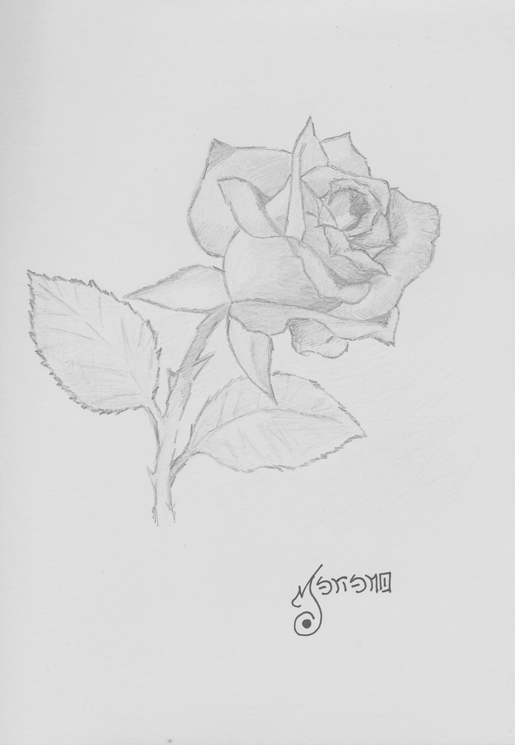 Mno Dibujo Rosa a Lapiz by rextir on DeviantArt