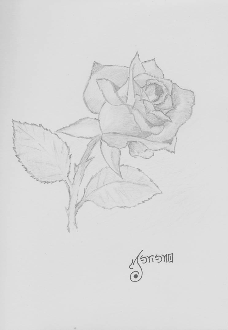M No Dibujo Rosa A Lapiz By Rextir On Deviantart