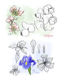 Lathyrus and Iris by SachiiA