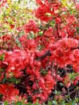beaut florale